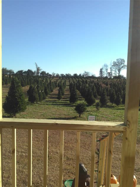 100 lone silo christmas tree farm jessica alex