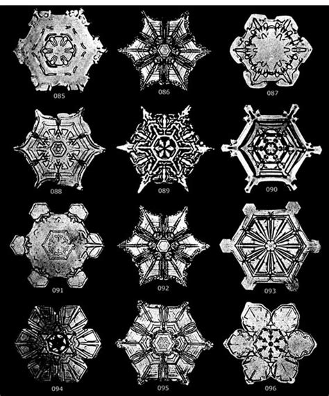 snowflake bentley the photographs of snowflakes by snowflake bentley