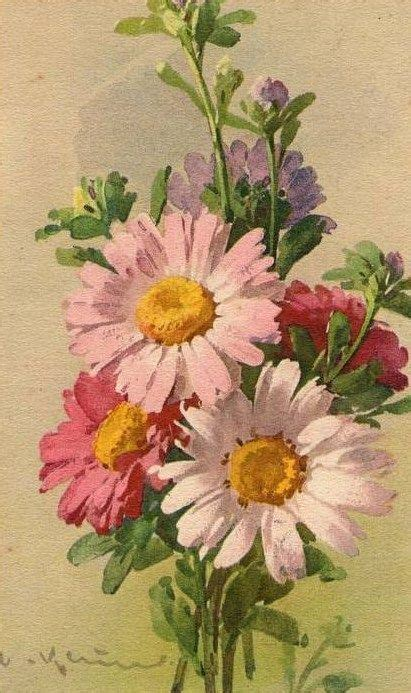 En Catherine Flower fleurs mauves images vintage and marguerites on