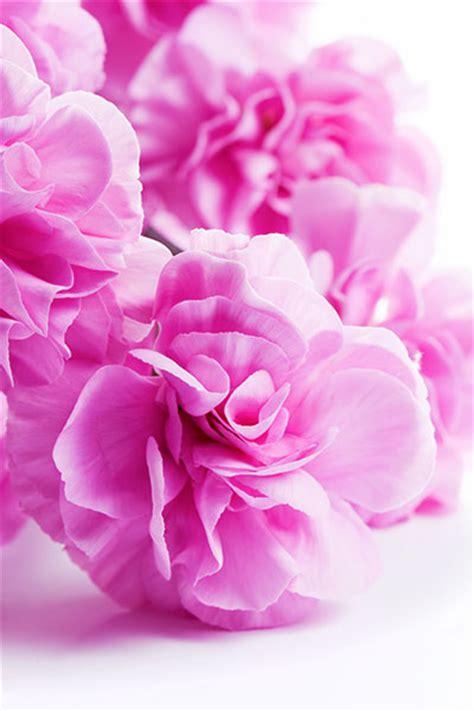 regalare un fiore festa della mamma i fiori da regalare