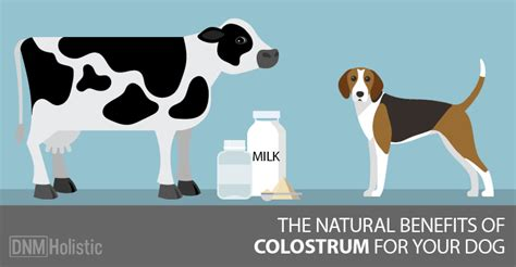 colostrum for dogs bovine colostrum the forgotten miracle