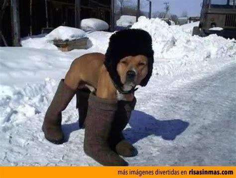 imagenes de invierno frio im 225 genes divertidas de fr 237 o