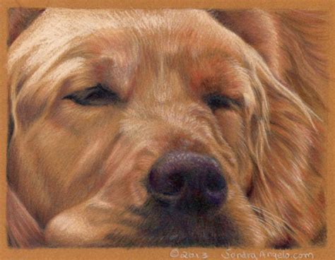 gold color pencil how to draw a golden retriever with colored pencils