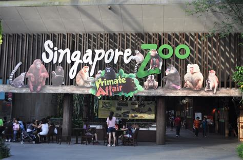 singapore zoo  singapore attraction  singapore