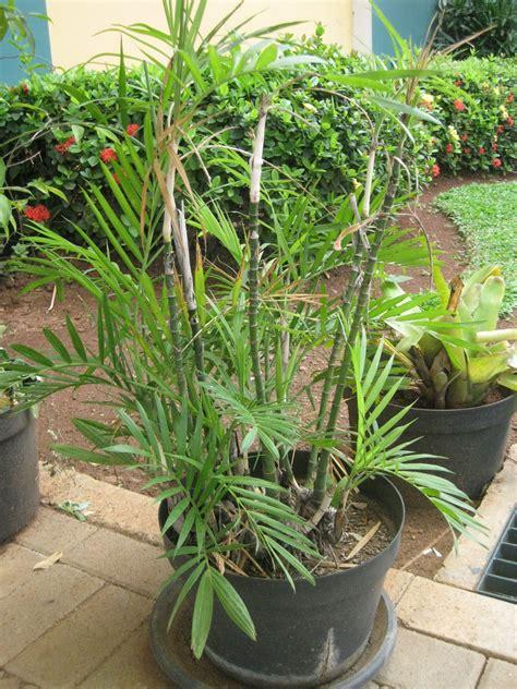 artikel tips kecantikan  berita tanaman hias