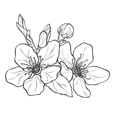 fiori di ciliegio disegno oltre 25 fantastiche idee su disegni di fiori su