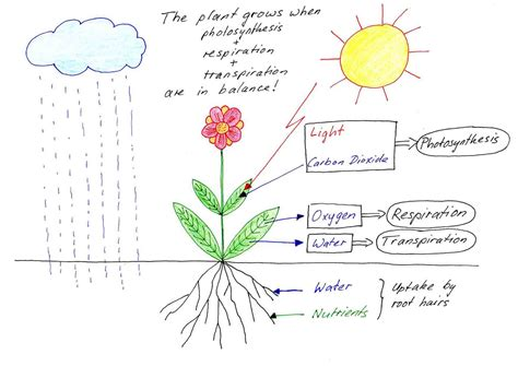 How To Grow A Flower Garden How Do Plants Grow Free Information On Plant Development
