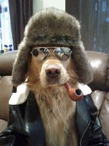 cool things for dogs cool with sunglasses dogs picture