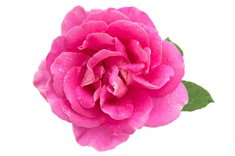 angelina organic skincare rose amp cardamom cleanser