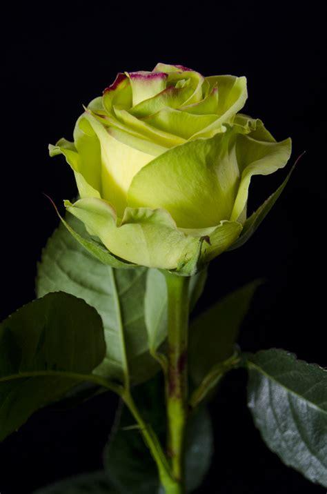 imagenes lindas verdes cayambe i just like green flowers r 243 że pinterest