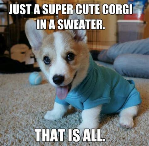 Corgi Puppy Meme - corgi puppy meme www pixshark com images galleries