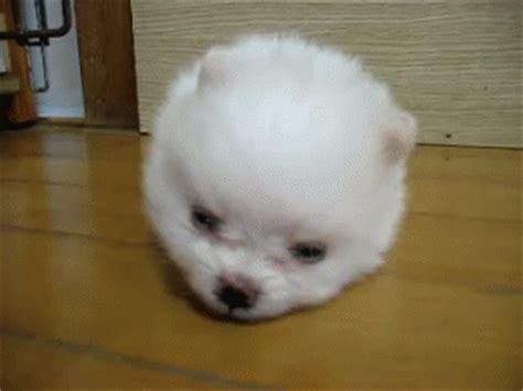 sleepy puppy gif sleepy puppy gif animals dogs puppy discover gifs
