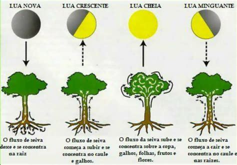Calendario C Lua Plantando Pelas Fases Da Lua Guia Pr 225 Tico Jardim Do Mundo