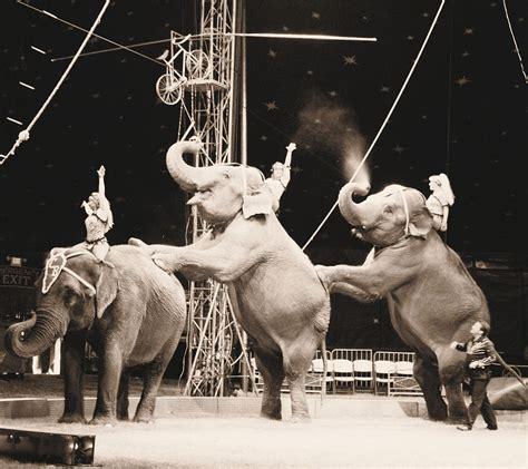 Circus Elephant Rage Three Elephant Circus Performance Photograph By Sally Bauer
