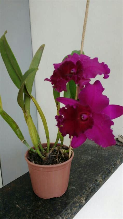 Orchid Planter Ideas by 17 Best Ideas About Orchid Pot On Orchids