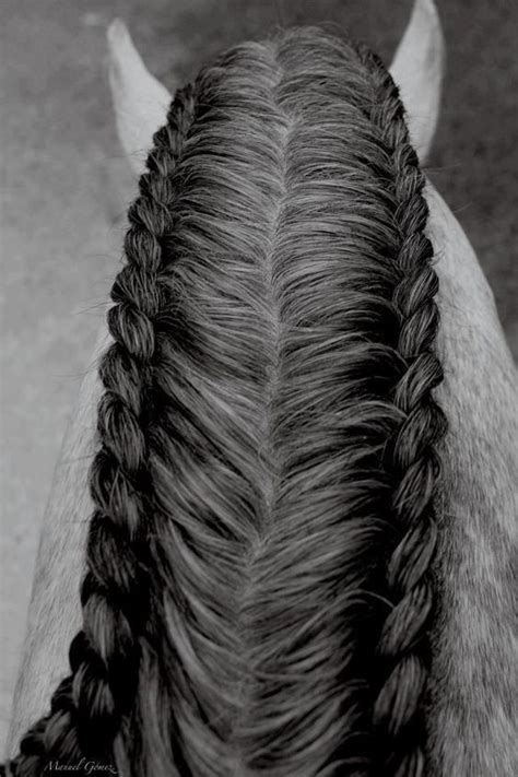 show pix of braid horse braids 10 braided manes every equestrian will envy
