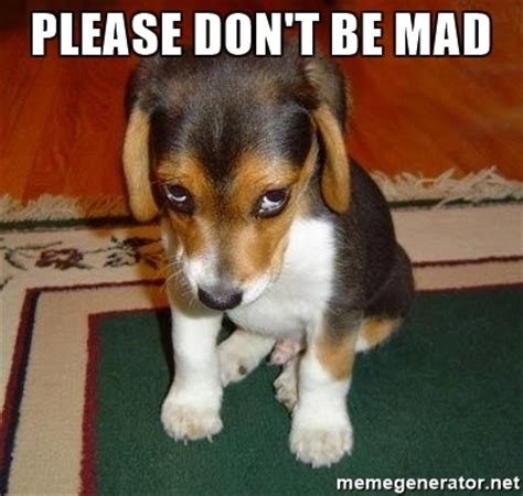 Dont Be Mad Meme - please don t be mad sad puppy meme generator