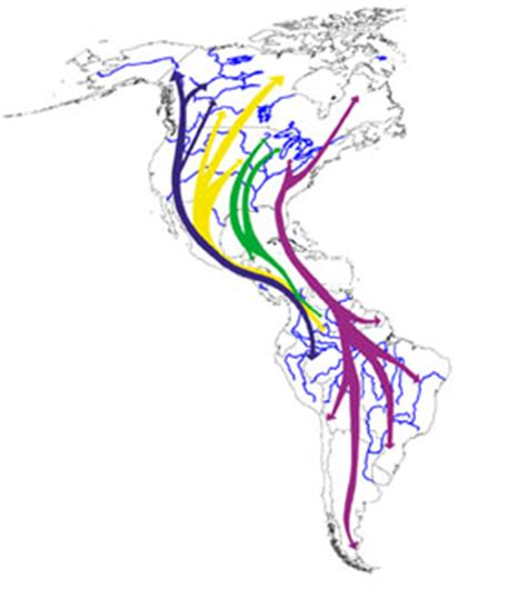 america bird migration map why is nj important for migrating birds