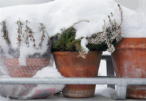 pflanzen winterfest einpacken winterharte k 252 belpflanzen obi ratgeber