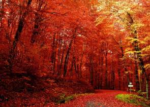 joie de vivre 5 things i love fall edition