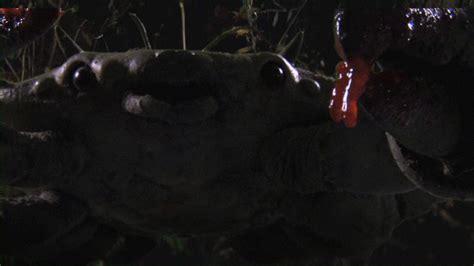 film queen crab queen crab 2015 stop motion killer crab horror movie