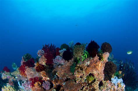 manta dive gili fish id manta dive resort gili air