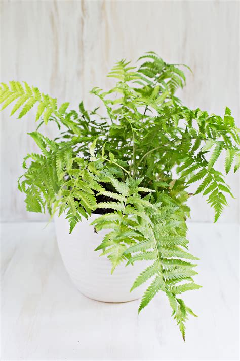unique indoor plants 7 unique non toxic houseplants a beautiful mess