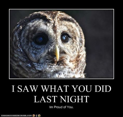 Meme Owl - owl meme by therealfry1 on deviantart
