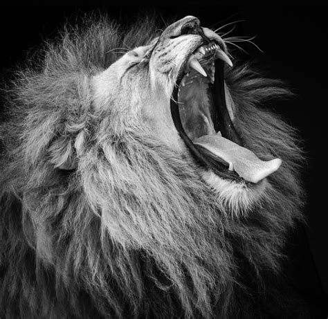 lions roar results of 5th clubman are black and white wakefield
