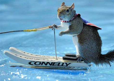 sw man jet boat crowds go nuts for water skiing squirrel and she can t get