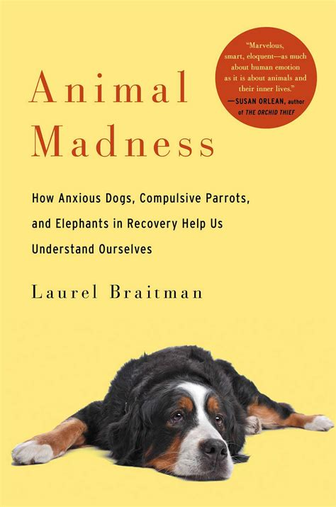 in our dogs books animal madness how deciphering mental illness in our
