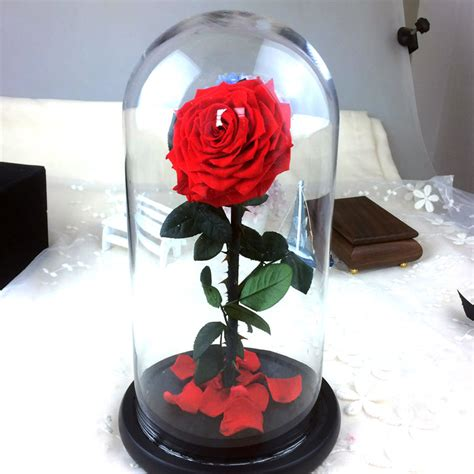 rose in glass popular preserve roses buy cheap preserve roses lots from