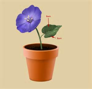 Flower Pot by Create A Flowerpot From Scratch In Photoshop