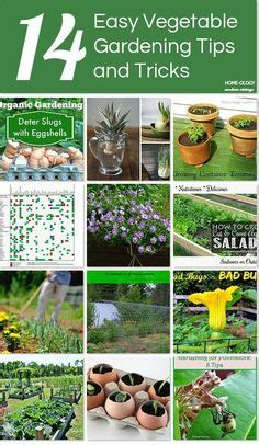 Vegetable Garden Tips And Tricks The World S Catalog Of Ideas