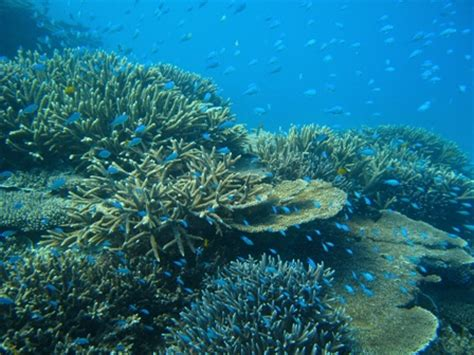 Coral Reef Research Paper by Research Paper On Acidification Coral Reefs