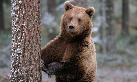 imagenes de osos navideños galer 237 a de im 225 genes im 225 genes de osos