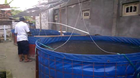 Harga Terpal Kolam 2016 cara budidaya ikan lele kolam terpal biofloc lengkap