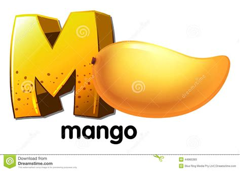 a m a letter m for mango stock vector image of education