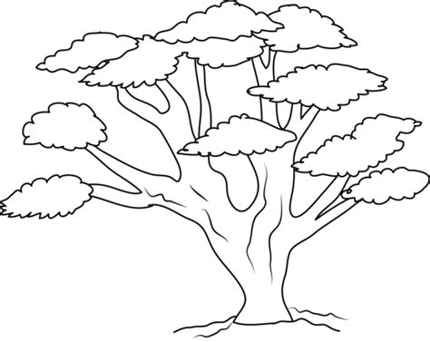 narra tree coloring page oak tree coloring page free clip art