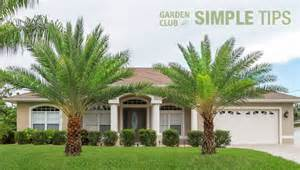 embrace the tropics plant palm trees now garden club