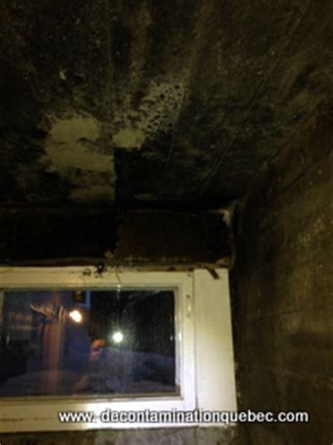 moisissure dans une chambre moisissures d 233 contamination qu 233 bec inc