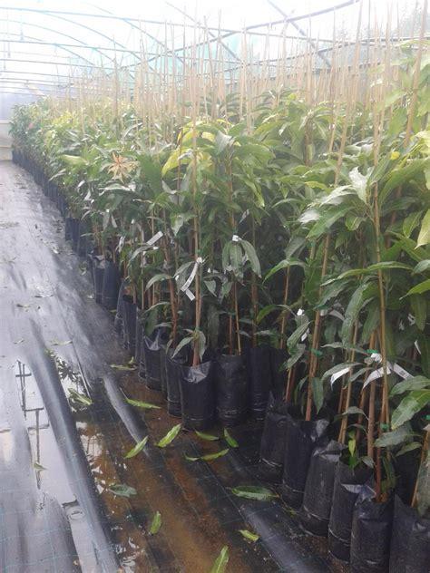 ricanti in vaso piante ricanti in vaso piante perenni da vaso idee per