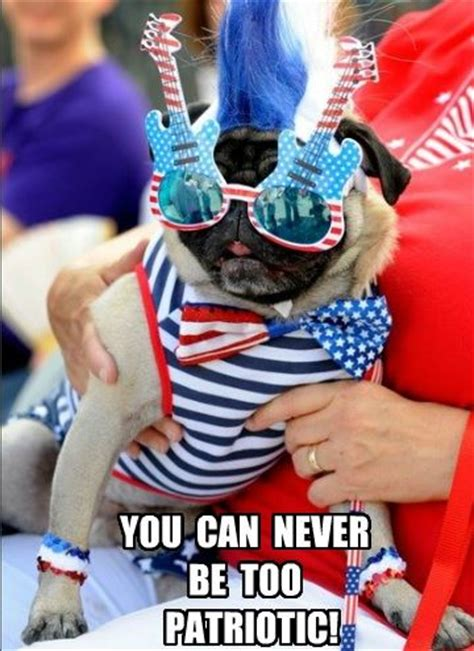 Funny Patriotic Memes - 17 best images about pugs on pinterest pug love funny