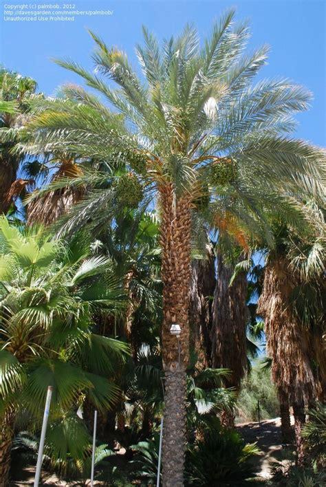 Palm Desert Botanical Gardens Palm Desert Botanical Gardens Palm Springs Garden Botanical Garden Photography Plantfiles