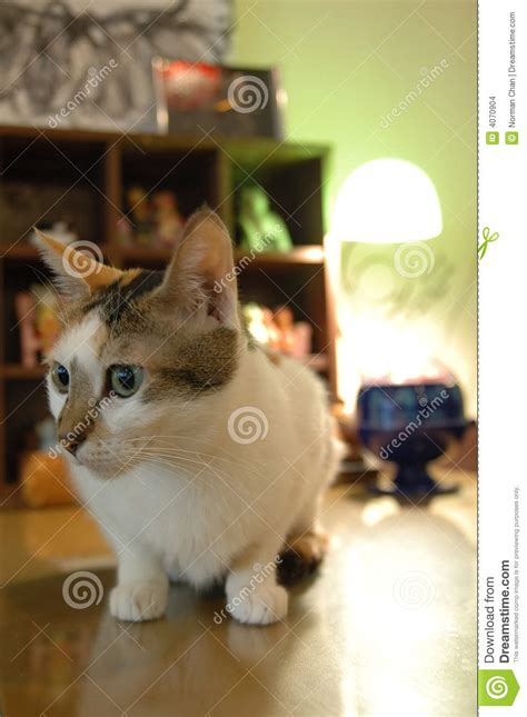 Cat Sitting At Table Meme - cat sitting on table stock images image 4070904