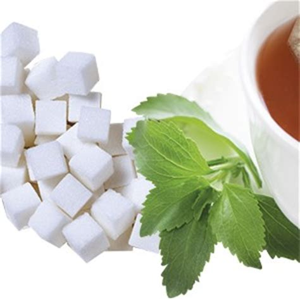 stevia coltivazione in vaso stevia aromatiche coltivazione cucina ed erboristeria