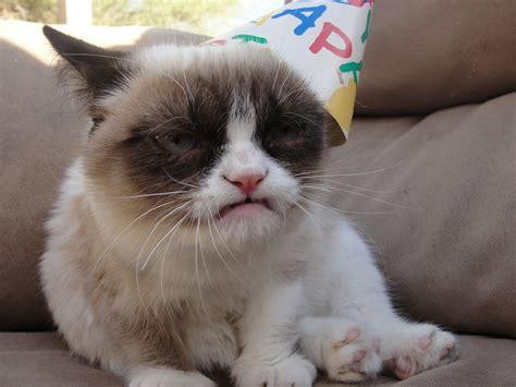cat wallpaper imgur grumpy cat does not like birthdays imgur