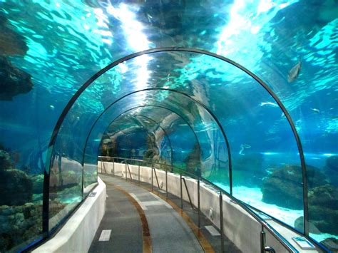 House Design Ideas Mauritius by How Do You Build A Tunnel Underwater Wonderopolis