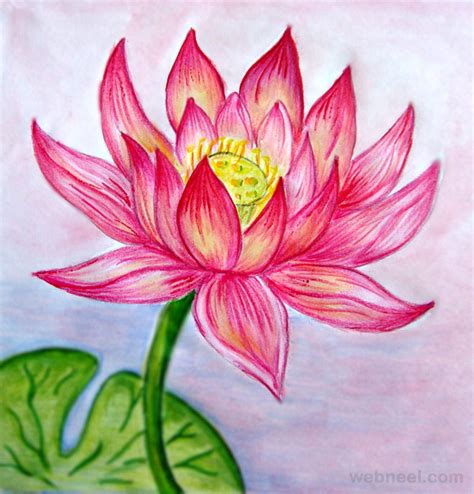 drawing of lotus flower 40 beautiful flower drawings and realistic color pencil
