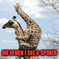 Giraffe Spider Meme - scared giraffe imgflip